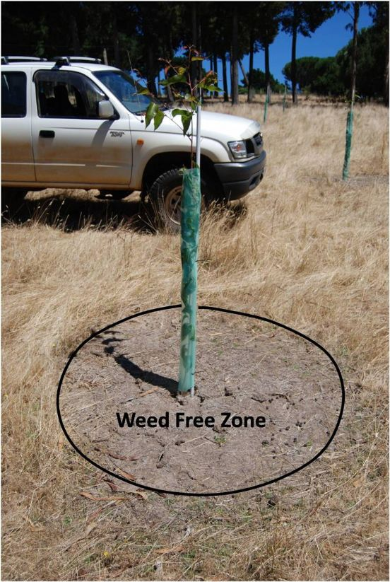 /edit/images_hr/WEED_FREE_ZONE.JPG